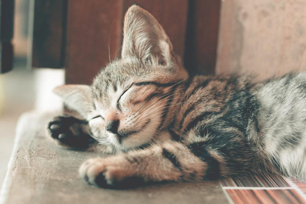Katzen-Krankenversicherung