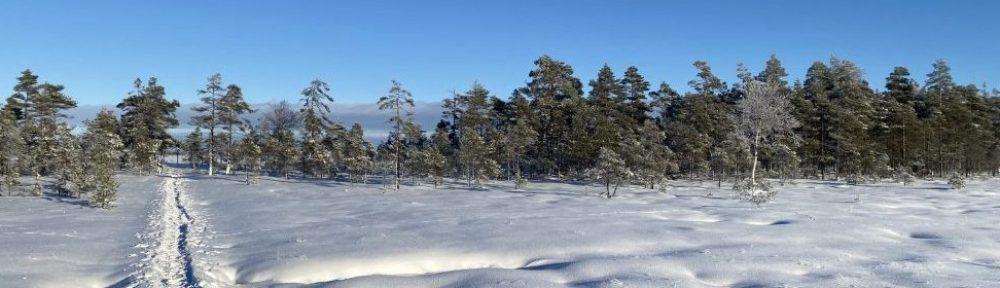 Bushcraft Sverige