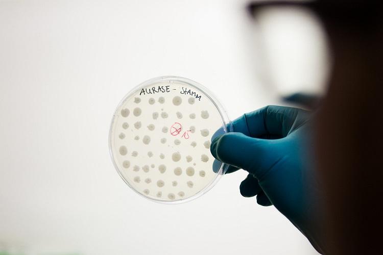 SolasCure Aurase petri dish image