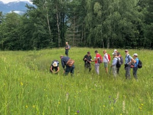 Hunting for wildflowers at the Bohinj International Wild Flower Festival.