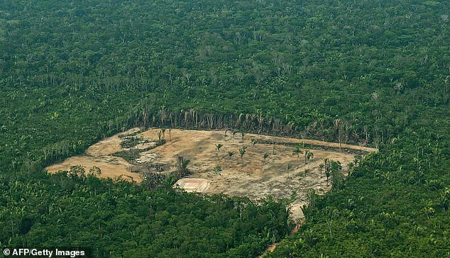 Researchers caution that the problem traces back to humanity but that it's not too late to fix it. Problems include the annihilation of natural landscapes, forests (Amazon pictured) and wetlands - leading to an 'unsustainable' loss of plants of animals which risk extinction