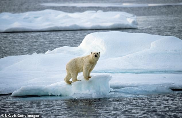 Polar bear on pack ice floating in the Arctic ocean on the North Pole.Nature is in more trouble now than at any time in human history with extinction looming over one million species of plants and animals, experts say