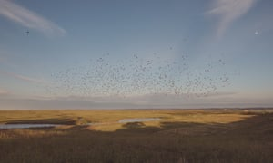 Starlings over Elmley nature reserve