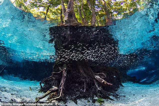 According to the Florida Springs Institute, the springs are running at levels 30 percent to 40 percent lower than they were decades ago