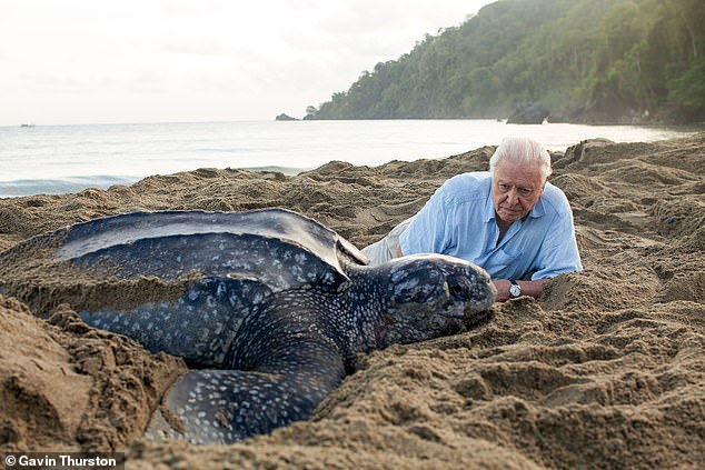 Sir David — pictured here with a leatherback turtle — and colleagues were recognised for their production of the 'Blue Planet II' documentary series, which aired in late 2017 and early 2018