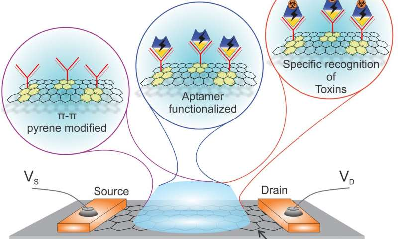 Mycotoxin detection by graphene field-effect transistor