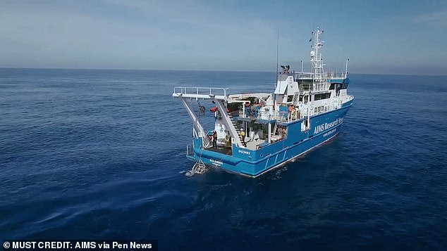 A population of the creatures has been found in shallow waters by a team from the Australian Institute of Marine Science. The crew had been towing a video camera through the waters of Kimberley Marine Park in Western Australia
