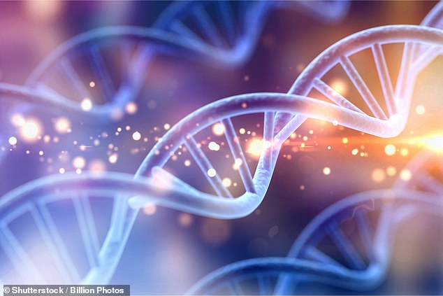 It is thought that the interbreeding occurred roughly 50,000 years ago, around the same time that Neanderthals were breeding with modern humans elsewhere in the world (stock photo)