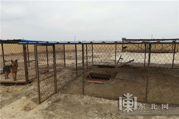 Chinese Kennel Owner Caught Stealing Electricity to Power Underground Bitcoin Mining Farm