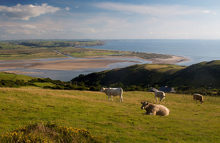 The 25,000-acre Summit to Sea rewilding project in Wales has been stalled due to opponents who claim it would empty their communities