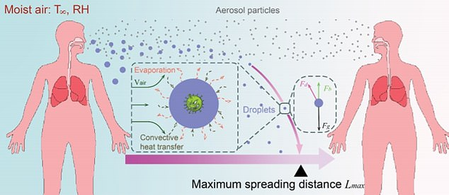 Diagram pictured above explains how coronavirus would spread under normal conditions. Aerosols are smaller and lighter and can spread further than droplets, but droplets are believed to be more infectious (pictured)