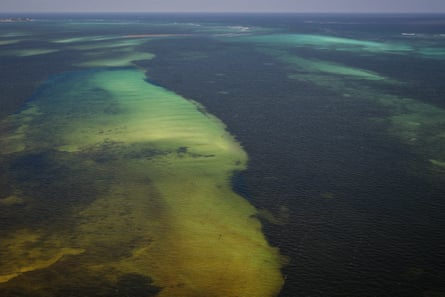 An aerial view from the Armada Navy of Mexico, of the affectations caused by the sargassum in the beaches of the state of Quintana Roo, Mexico, 17 July 2019