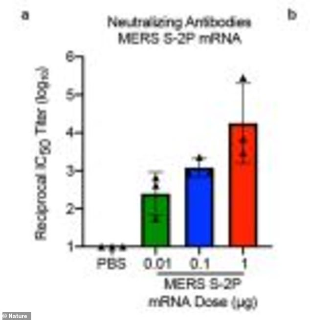 Mice were given two intramuscular doses three weeks apart and then exposed them to the virus five and 13 weeks later, but the mice didn't fall ill (above) due to neutralizing antibodies