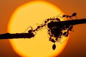 Ants Accelerate – Alibaba's Blockchain Arm Goes into Overdrive 101