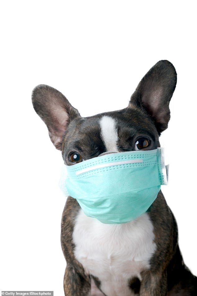 Masks for dogs exploded in popularity in China at the start of the pandemic, due to fears the virus could be spread to pets