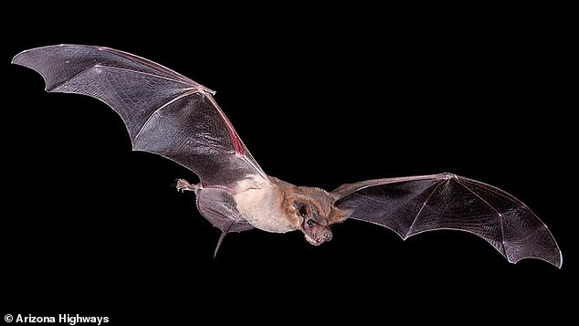 Officials believe it was a colony of Mexican free-tailed bats that dispersed in search of insects around the city