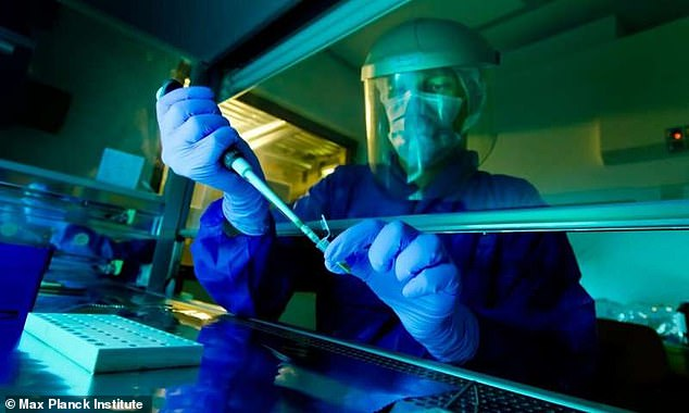 The team developed a method to filter out the human Y chromosome molecules from the microbial DNA that typically contaminates ancient remains — after using which they were able to reconstruct each specimen's Y chromosome sequence. Pictured, researcher Matthias Meyer works on samples at theMax Planck Institute for Evolutionary Anthropology