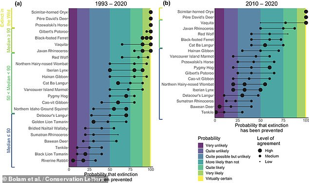 The researchers determined that — without conservation efforts — the rate of extinction would have been around 3–4 times higher, with an estimated 21–32 bird and 7–16 mammals species have been saved from vanishing since 1993. Pictured, the researchers estimates of whether conservation efforts had saved some of the species analysed in the study