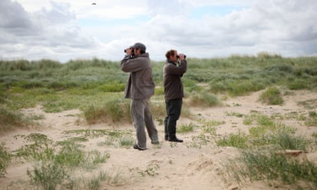 Ornithologists carry out ringing of common terns on Blakeney Point off the North Norfolk Coast, England, Britain