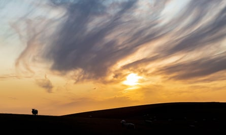 A silhouetted sheep on the South Downs in Sussex