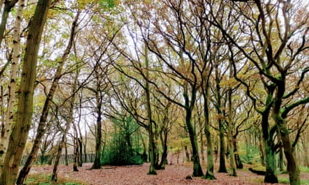 Conkers Circuit, National Forest, Derbyshire
