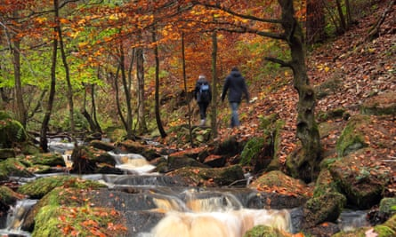Walkers on a footpath surrounded by stunning autumn foliage in scenic Wyming Brook nature reserve in Sheffield city's Peak District region