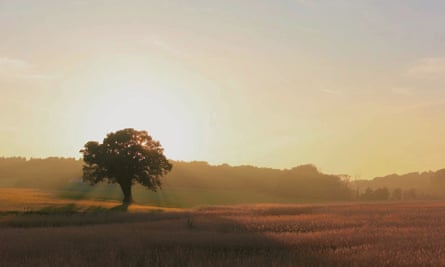 Oak tree in a field near Levington, Suffolk