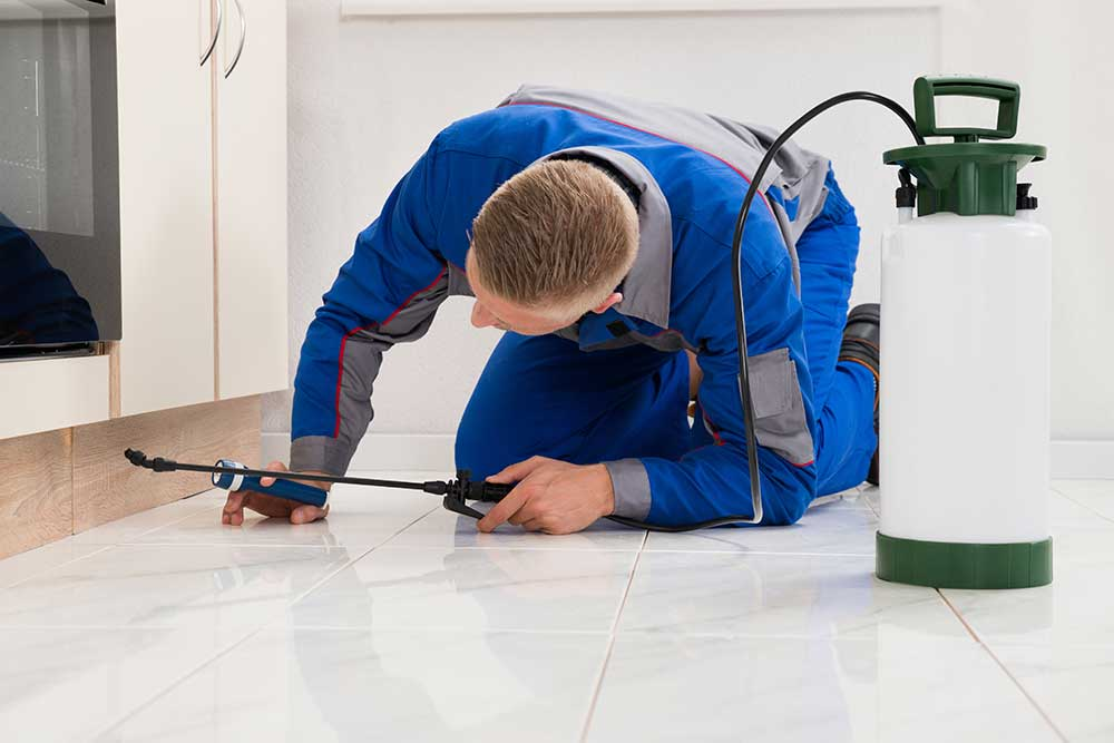 How Pest Control Professionals Can Help You with Safe Pest Removal