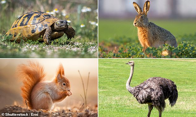 The tortoise and the hare...and the squirrel and the ostrich. Which type of investor are you?