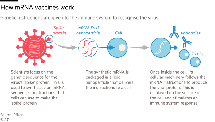 Infographic explaining how mRNA vaccines work