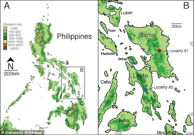 The three specimens were collected from the islands of Samar and Leyte in the south Philippines. The country is home to at least 112 species of snakes in at least 14 genera
