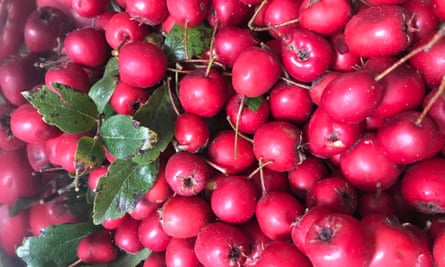 Red haw berries