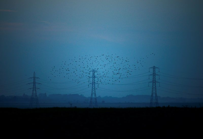 © Reuters. Migrating starlings fly at dusk past electricity pylons silhouetted by the sunset of a clear autumn evening in the Kent countryside,  in Graveney, Britain