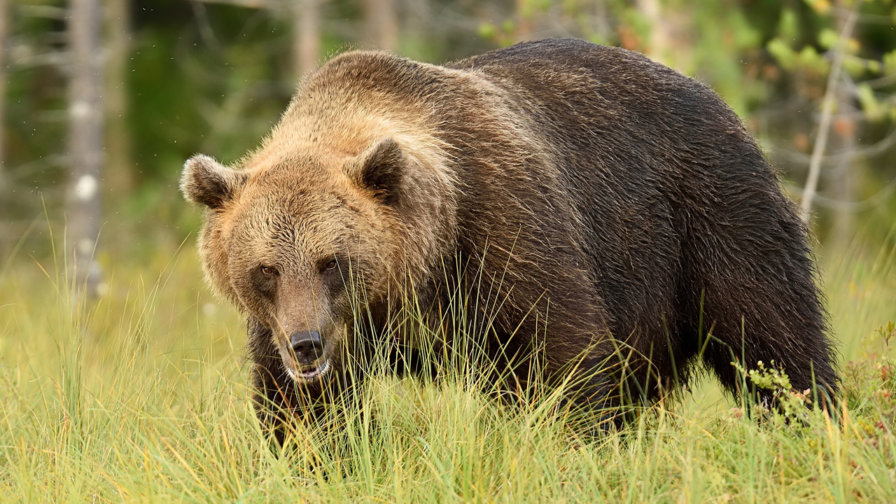 """Wall Street """"Perma Bear"""" Predicts Stock Market Crash: Says Bitcoin Cannot Be Ignored as He Touts Gold"""
