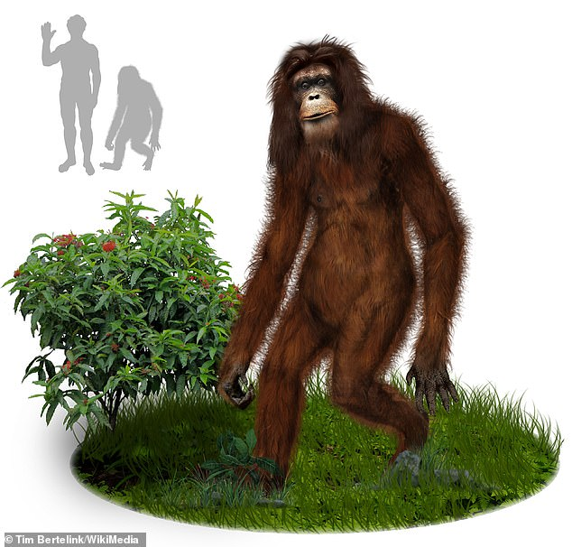 An Orang Pendek is a creature in Indonesian folklore, similar to America's Big Foot, which lived in forest son the island of Sumatra (concept drawing)