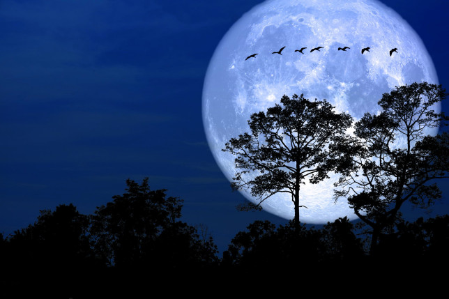 The Snow moon will illuminate the night sky this weekend (Credits: Getty Images/iStockphoto)