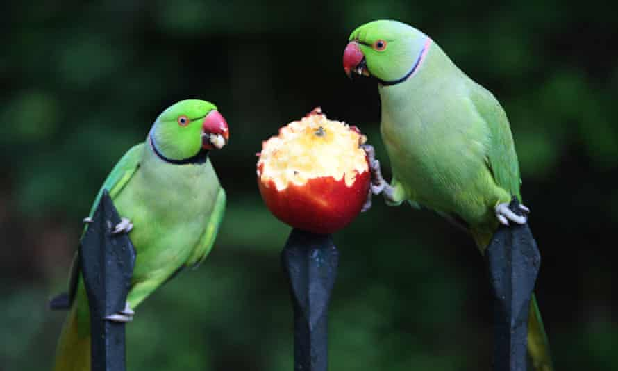 'Enough with the bloody parakeets, I hear myself thinking.'