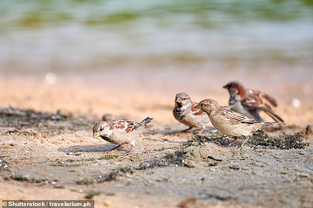 Climate change has caused record high tides and flooding in the Southeast, threatening theMacGillivray's nesting, breeding and feeding areas