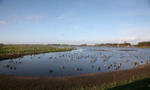 Wildfowl on Martin Mere wetland nature reserve.