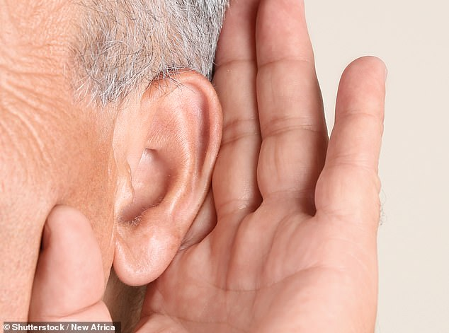 The tinnitus that occurs following exposure to loud noise, or as a result of ear infections, occurs when the tiny hair cells in the ear that help transmit sounds to the brain become stressed and emit excess quantities of glutamate, a chemical messenger