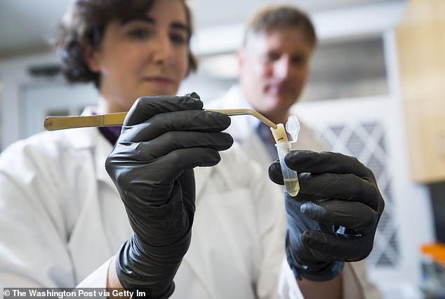 An epidemiologist tells DailyMail.com the CDC needs to ramp up by helping increase the capacity of labs with the ability to perform genome sequencing, asking them how much it will take to double or triple capacity. Pictured: Scientists perform genetic sequencing In Port Isabel, Texas, March 22