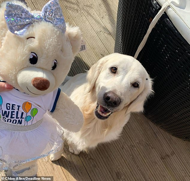 Not wanting other dog owners to have to go through what she had, Chloe issued a warning on April 2 on Facebook about the dangers of lord-and-ladies berries