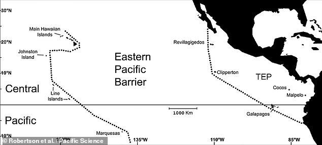 The turtles' 9,000-mile journey to distant foraging grounds, however, sees the temperature-sensitive creatures somehow traverse a frigid zone called the Eastern Pacific Barrier, pictured