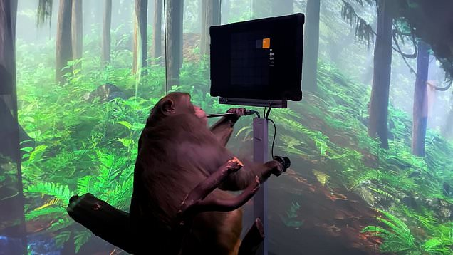 Neuralink - Elon Musk shares a video of a monkey playing pong with its mind