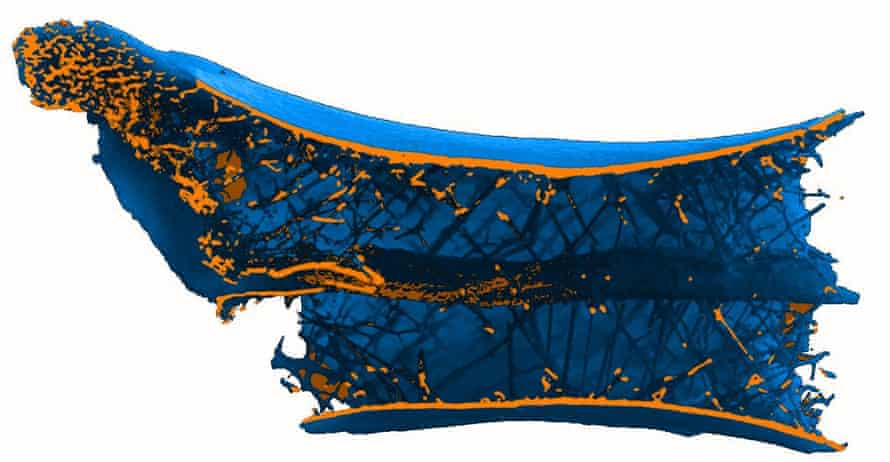 A CT scan of the pterosaur bone showing the spoke-like structures, arranged in a helix around a central tube inside the vertebra