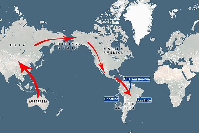 Researchers propose the ancestry stems from early Australians who integrated with the first Americans who made the long journey from Asia over the Bering Strait Land Bridge some 15,000 years ago