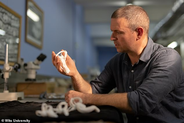 Professor Jonah Choiniere at the University of the Witwatersrand in Johannesburg, South Africa, holding a 3D printed model of the lagena of Shuvuuia deserti