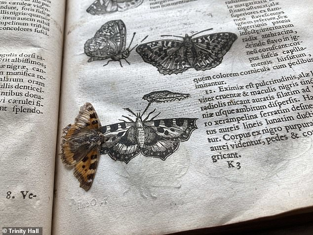 The amazingly preserved butterflyis thought to be roughly as old as the volume, according to boffins at Trinity Hall, Cambridge University where it was unearthed