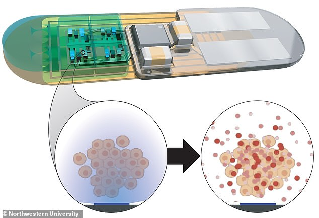 Combing synthetic biology with electronics, the implant (top) would contain engineered cells which, when activated by light (bottom left) produce the same peptides the body uses to regulate sleep/wake cycles (bottom right)