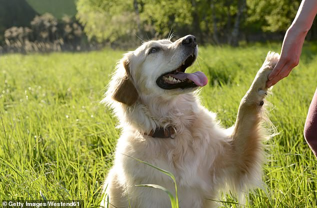 Paws for thought: Even those who pay hundreds of pounds a year for cover are still not guaranteed they won¿t be hit with a big vet bill when their pet falls ill